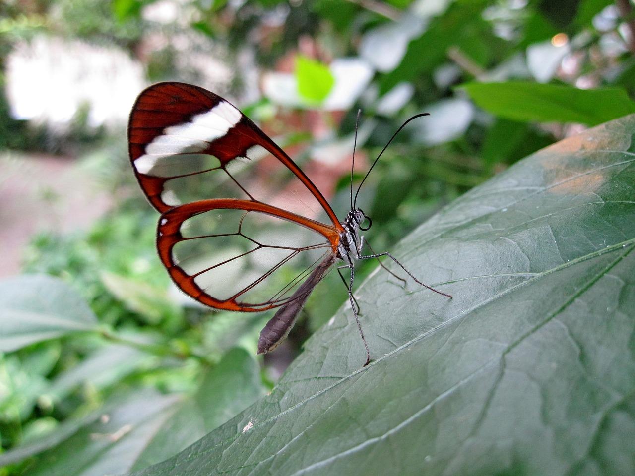 butterfly-1685728_1280