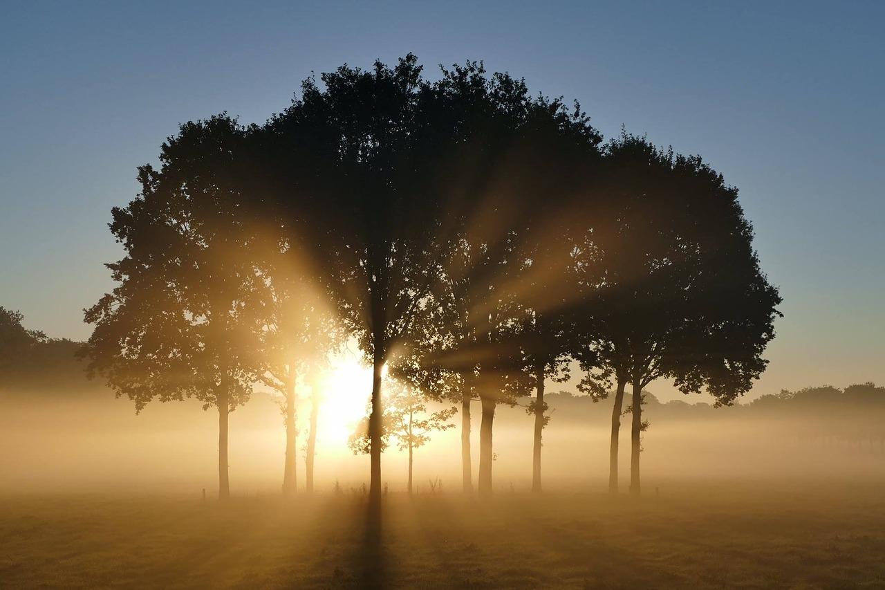 trees-1657824_1280